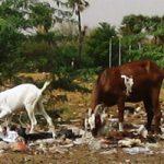 Des pavés en plastique pour protéger l'environnement