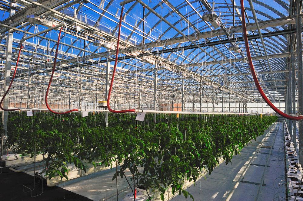 agriculture-toit-fermes-lufa2